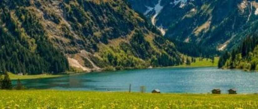 alpen weide in oostenrijk